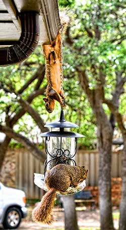 Squirrel Feeder Deux