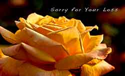 Sorry for Your Loss - Yellow Rose