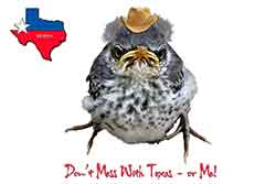 Winston-Dont-Mess-With-Texas