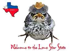 Winston - Welcome to Lone Star State